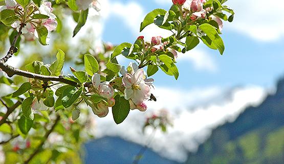 Blütezeit im Tal der Almen